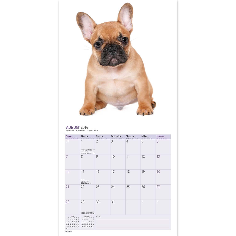 french bulldog kalender 2016. Black Bedroom Furniture Sets. Home Design Ideas