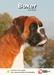 Lente Aanbieding Boxer + Hondenopvoeding